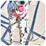 Photo 3 - Dalmatian Dog for adoption in Mandeville Canyon, California - Gracie