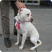 Adopt A Pet :: Mopey - AMAZING DOG!!! - Seattle, WA