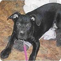 Adopt A Pet :: Max - Wauwatosa, WI