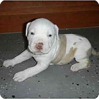 Adopt A Pet :: Milo - Mesa, AZ