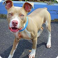 Adopt A Pet :: Ruby Rose - Southampton, PA