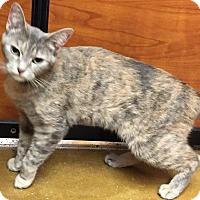 Adopt A Pet :: Westard - Salisbury, NC