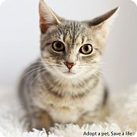 Adopt A Pet :: Daisy - Xenia, OH