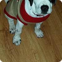 Adopt A Pet :: Dickens - Adopted! - Croydon, NH