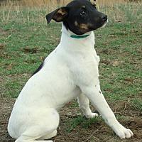 Adopt A Pet :: KALI~SPECIAL ADOPTION FEE - Waterbury, CT