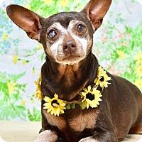Adopt A Pet :: Margo - Dublin, CA