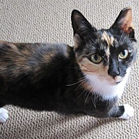 Adopt A Pet :: Wynter - N. Billerica, MA