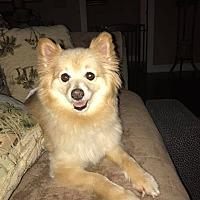 Adopt A Pet :: Delilah - Norman, OK
