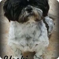 Adopt A Pet :: Yoshi - Anaheim Hills, CA