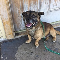 Adopt A Pet :: Zippo - San Pedro, CA