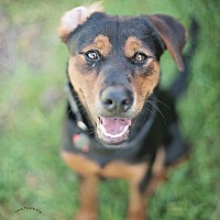 Adopt A Pet :: Joshua - Kingwood, TX