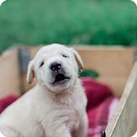 Adopt A Pet :: Rhonda $250 - Seneca, SC