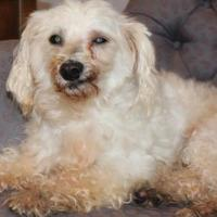 Adopt A Pet :: Brody - New palestine, IN