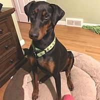 Adopt A Pet :: Luna ~courtesy post~ - Conesus, NY