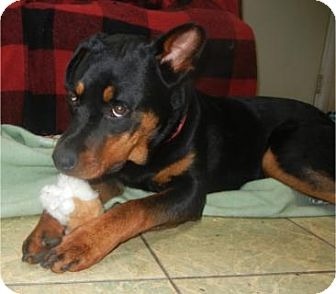 Rottweiler Dog for adoption in Antioch, Illinois - Jasmine ADOPTED!!