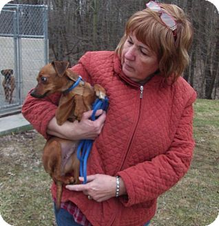 Miniature Pinscher/Chihuahua Mix Dog for adoption in Freedom, Pennsylvania - Jeannie