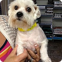 Adopt A Pet :: Ava - Ft. Bragg, CA