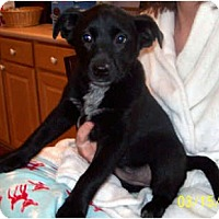 Adopt A Pet :: PARKER - Southport, NC