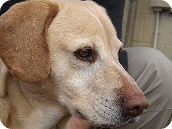 Labrador Retriever Mix Dog for adoption in Thomaston, Georgia - L.L.