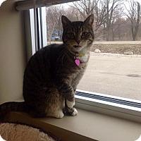 Adopt A Pet :: Genesis - Byron Center, MI