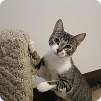 Adopt A Pet :: Meadow - Chesapeake, VA