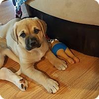Adopt A Pet :: Nukka - Marietta, GA