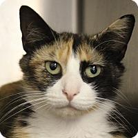 Adopt A Pet :: Roxy - North Branford, CT