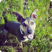 Adopt A Pet :: Amos - San Diego, CA