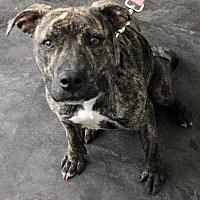 Adopt A Pet :: Rhapsody - Fort Madison, IA