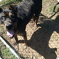 Adopt A Pet :: Captain-pending adoption - East Hartford, CT