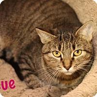 Adopt A Pet :: Sue - Baton Rouge, LA