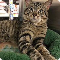 Adopt A Pet :: Topper - Barrington Hills, IL