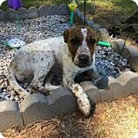 Adopt A Pet :: Randy - Chichester, NH