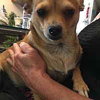 Adopt A Pet :: Jenna - San Ramon, CA