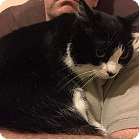 Adopt A Pet :: Zoe - Mansfield, TX