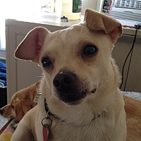 Adopt A Pet :: Caleb - Newell, IA
