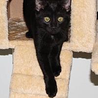 Adopt A Pet :: Eclipse - Columbus, OH