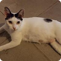 Adopt A Pet :: Clareta - San Antonio, TX