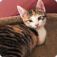 Adopt A Pet :: PeaPod - N. Billerica, MA