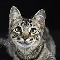 Adopt A Pet :: Ethan - Gainesville, FL