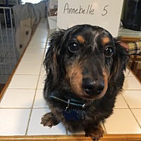 Adopt A Pet :: Princess Annebelle - Marcellus, MI