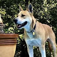 Adopt A Pet :: SUKI - Hagerstown, MD
