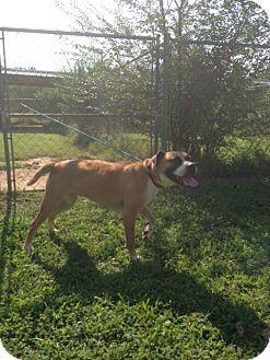 Labrador Retriever Mix Puppy for adoption in Monroe, Georgia - Lexie