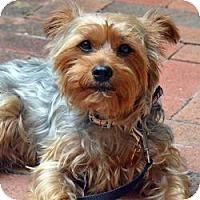 Adopt A Pet :: Odie - Miami, FL
