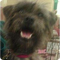 Adopt A Pet :: Miss Monster - Phoenix, AZ