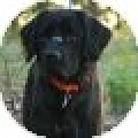 Adopt A Pet :: Bogey - Denver, CO