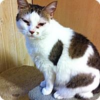 Adopt A Pet :: Jenni - Rock Hill, SC