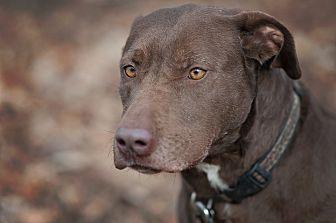 Labrador Retriever Mix Dog for adoption in Lewisville, Indiana - Pink