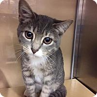 Adopt A Pet :: Clara w/BIG eyes - McDonough, GA
