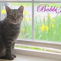 Domestic Shorthair Cat for adoption in Culpeper, Virginia - BobbiJo